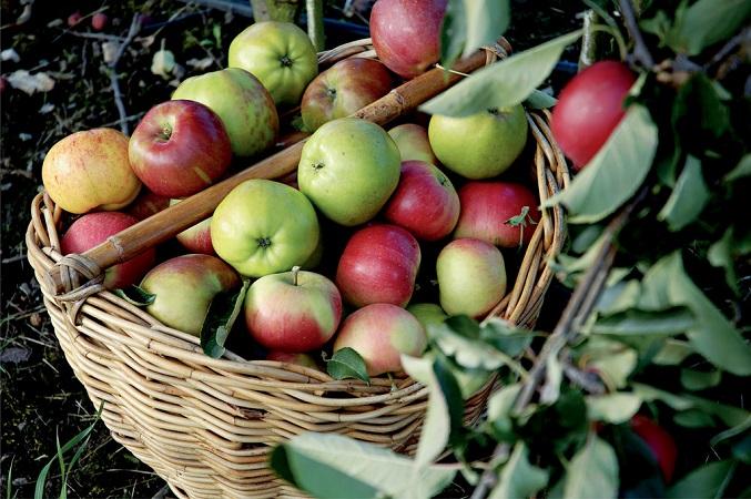 Apple Best Juice For High Blood Pressure