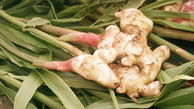 Ginger Natural Anti Inflammatory Juices