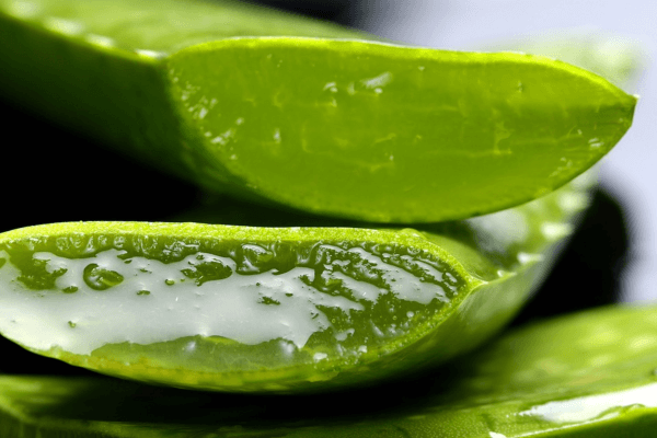 Aloe Vera Juice For Asthma